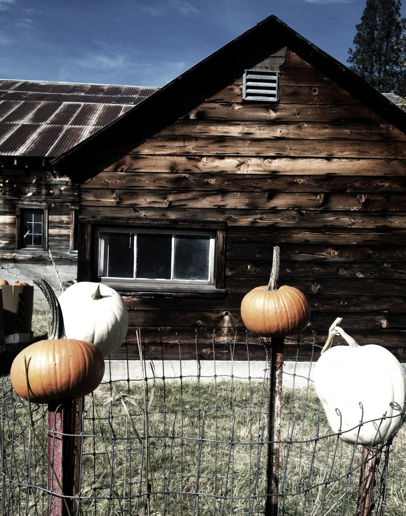 Pumpkins were thoughtfully placed everywhere you went.