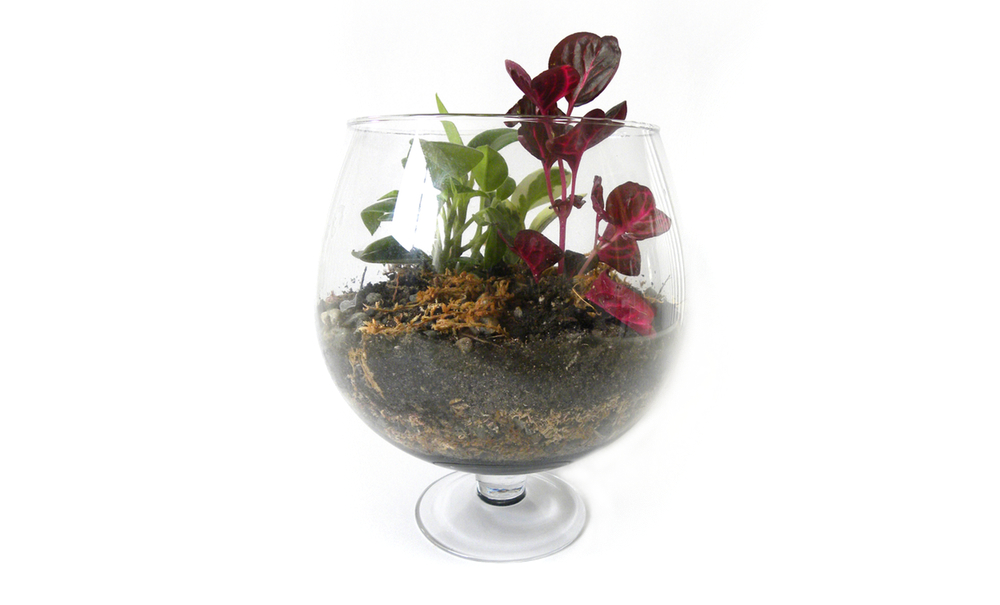 Quick Crafts: DIY Terrarium Tutorial
