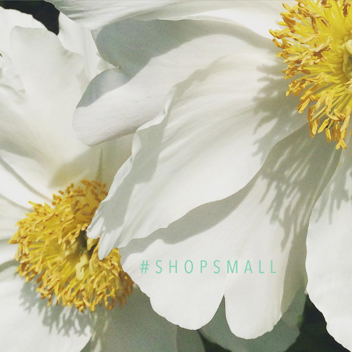 Photo Essay #9 – Great friends – Shop Small